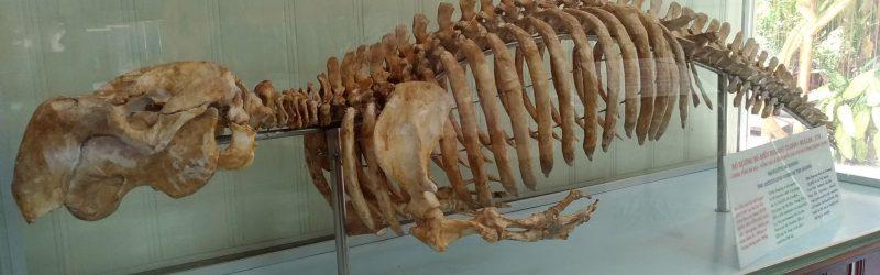 dugong01